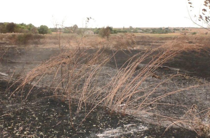 Шалена спека призводить до катастроф — на Добропільщині ледь не згоріли два села + ВIДЕО